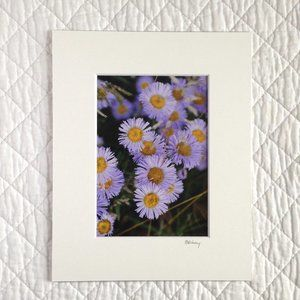"""Purple Fleabane"" 5x7 Photography Print"
